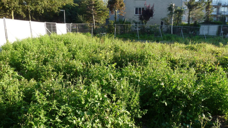 Wilde planten op braakliggend terrein